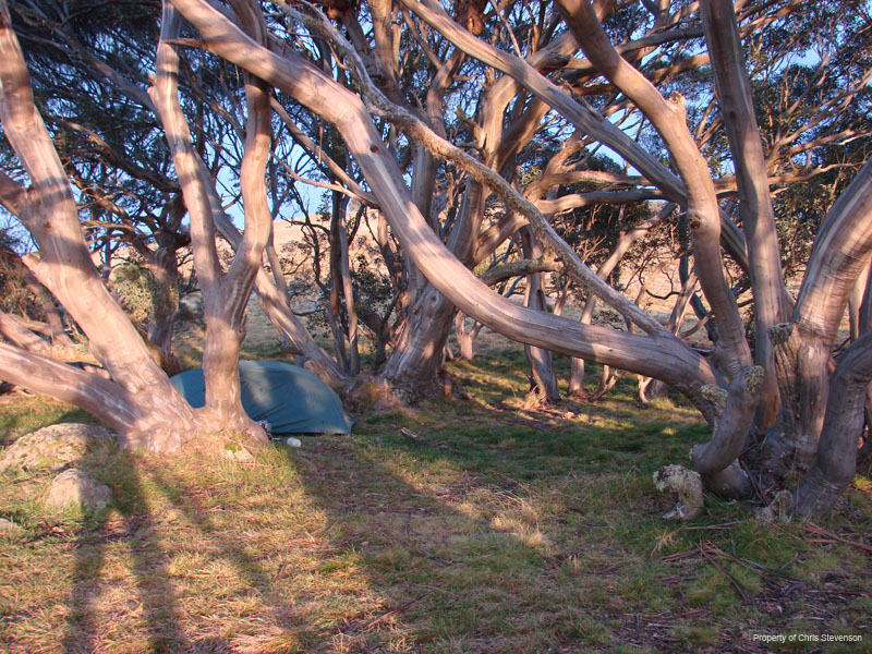 Camping near Cope hut - Victorian Alps